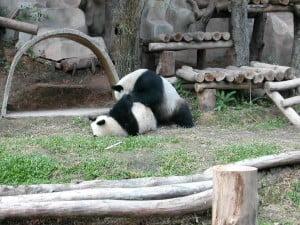 Chaing Mai Zoo