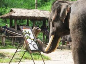 Elephant camp chiang mai