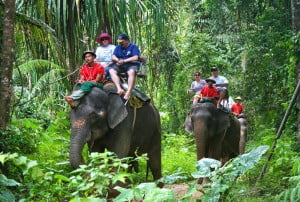 elephant trekking camp