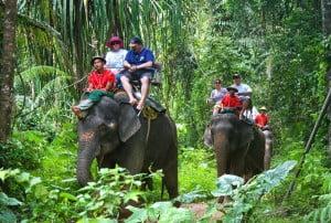 elephant trekking camp