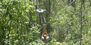 Illawarra Fly Zipline Tour - 5 Must book tours in Sydney