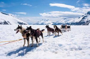 Alaska Husky sled - top 10 bucket list destinations
