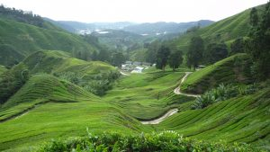 Cameron Highlands - 5 Best Spots To Hit In SE Asia