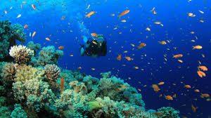 scuba diving - top 10 bucket list activities