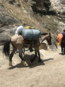 Mules - Choquequirao Trail Day 1